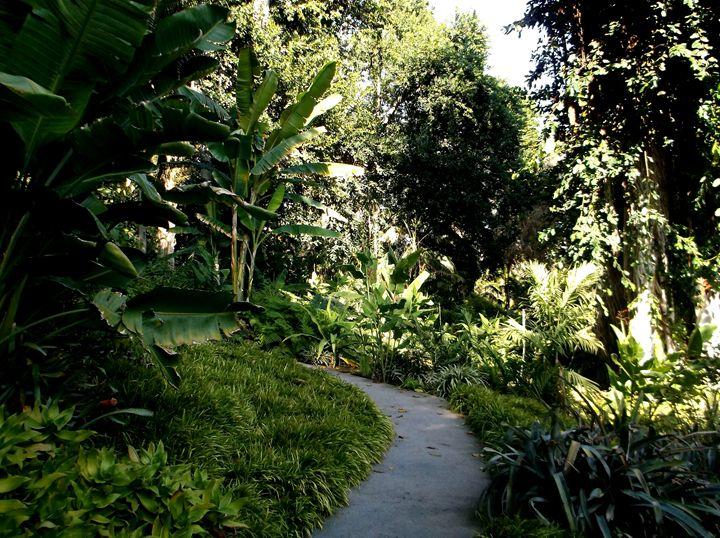 Jungle Path - Markell Smith Gallery