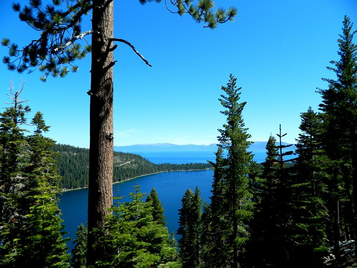 Emerald Bay View Point - Markell Smith Gallery