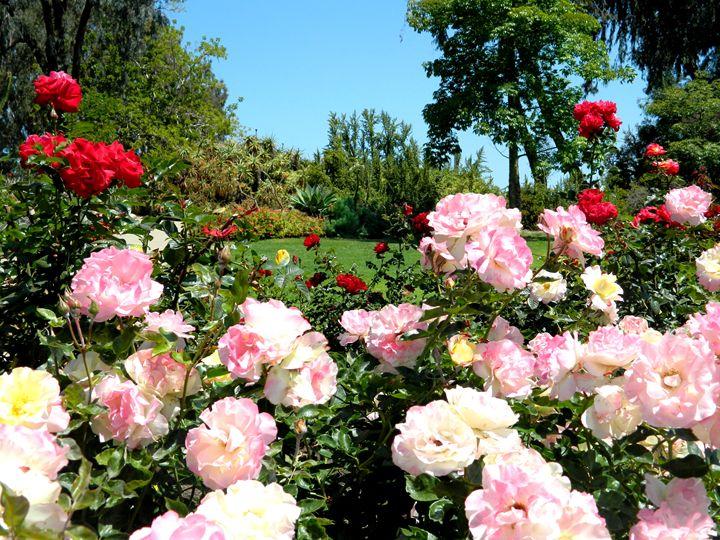 The Rose Garden San Diego - Markell Smith Gallery