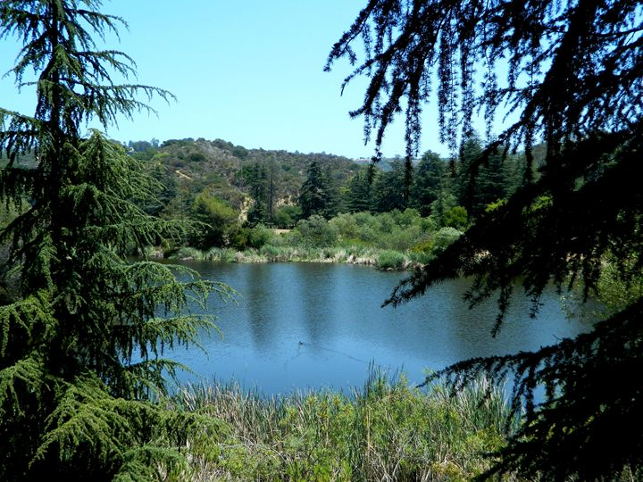 Franklin Canyon Lake - Markell Smith Gallery