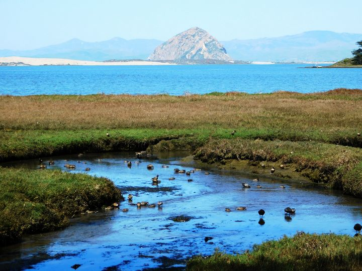 Morro Bay Marsh - Markell Smith Gallery