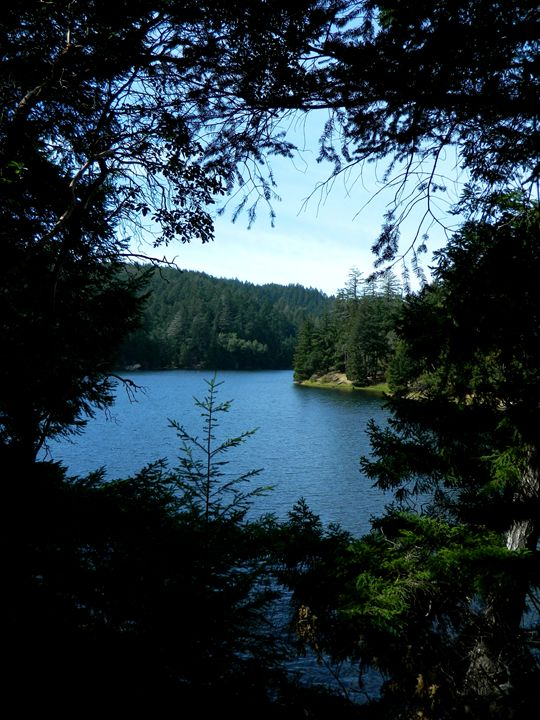 Lake Lagunitas - Markell Smith Gallery