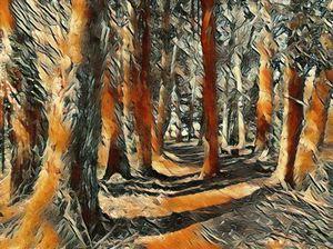 The Beautiful Woods