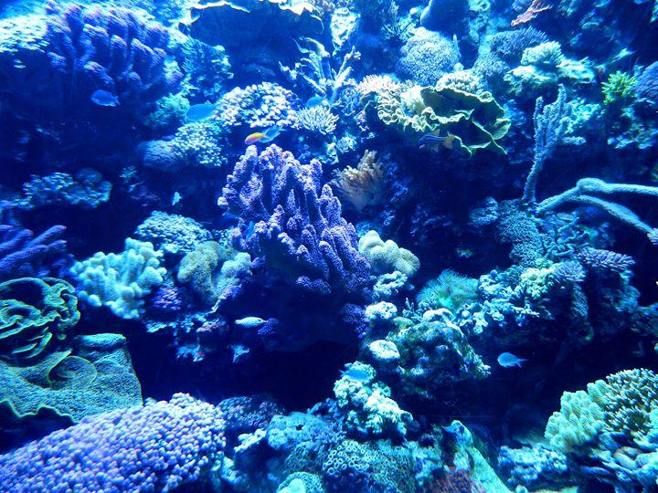 The Aquarium - Markell Smith Gallery