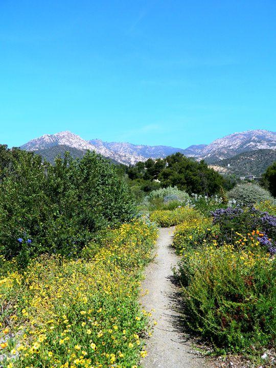 The Garden Path - Markell Smith Gallery