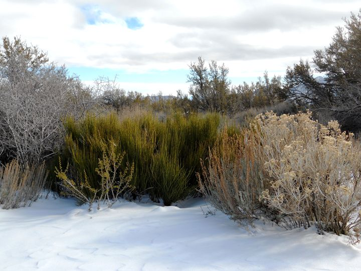 Snow in the Desert - Markell Smith Gallery