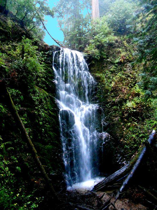 Berry Creek Falls - Markell Smith Gallery