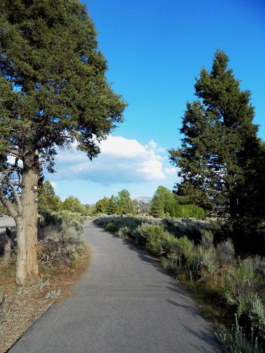 Big Bear Path - Markell Smith Gallery