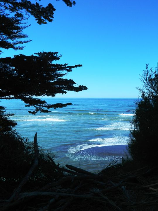 The Coastal Bluffs - Markell Smith Gallery