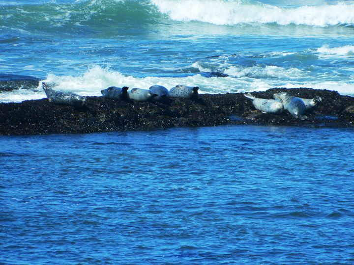 Seals on the Rock - Markell Smith Gallery