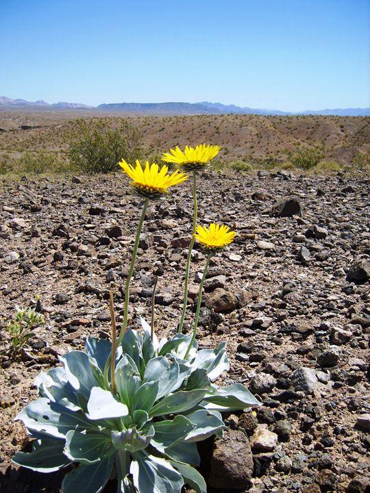 Desert Wildflower - Markell Smith Gallery
