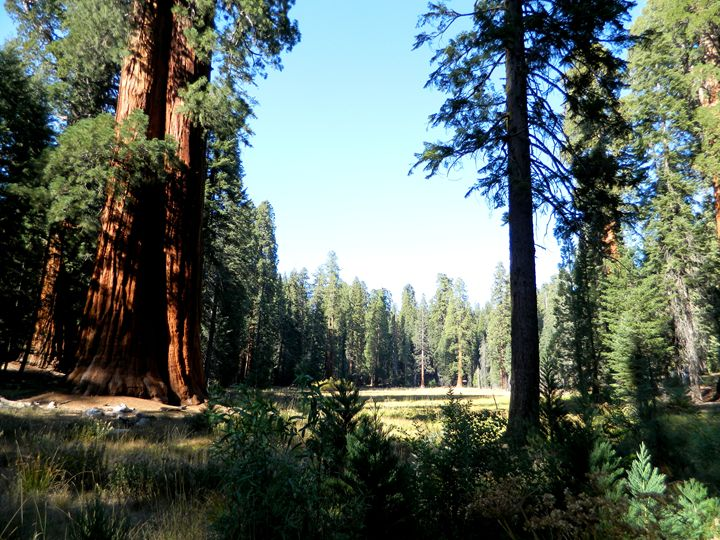 Sequoia Park - Markell Smith Gallery