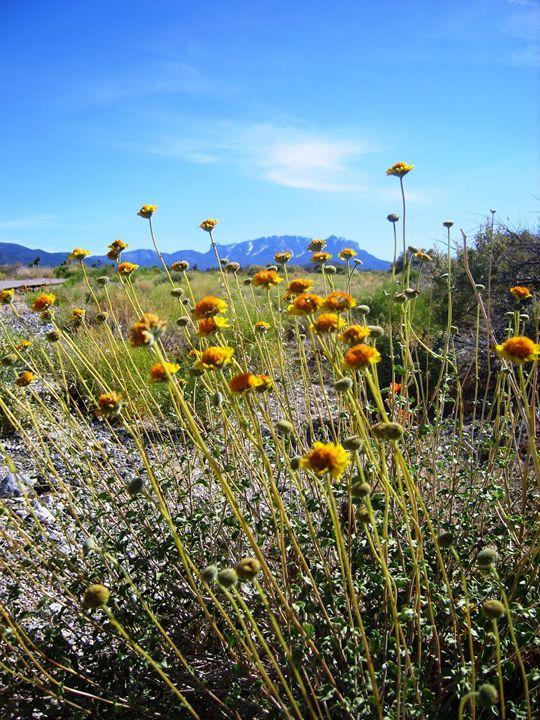 The Desert Flower - Markell Smith Gallery