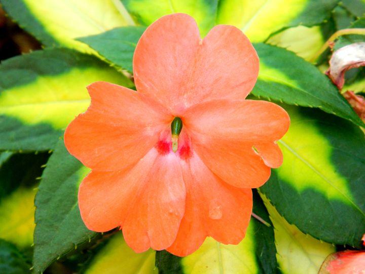 Orange Beauty - Markell Smith Gallery