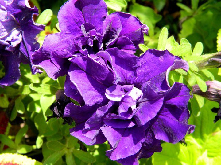 Purple Beauty - Markell Smith Gallery