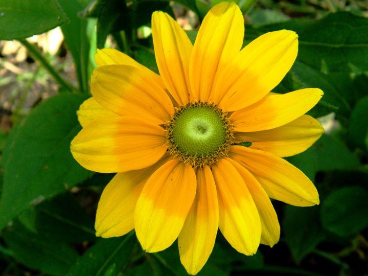 The Sun Flower - Markell Smith Gallery