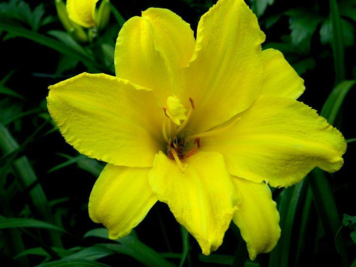 Yellow Beauty - Markell Smith Gallery