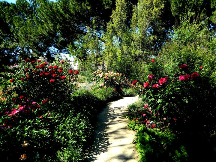 The Rose Garden - Markell Smith Gallery