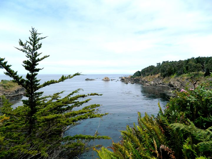 Mendocino Cove - Markell Smith Gallery