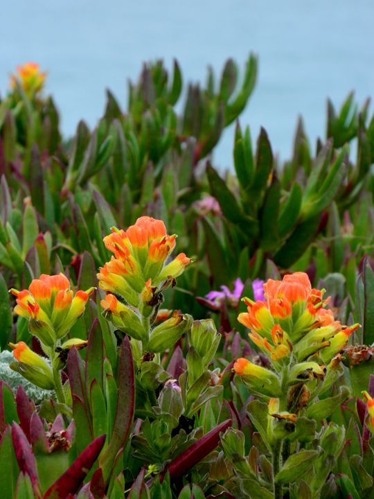 The Coastal Flower - Markell Smith Gallery