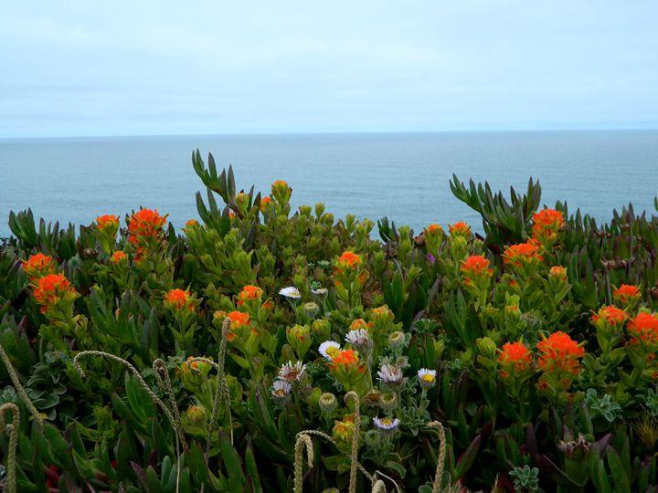 The Bodega Coast - Markell Smith Gallery