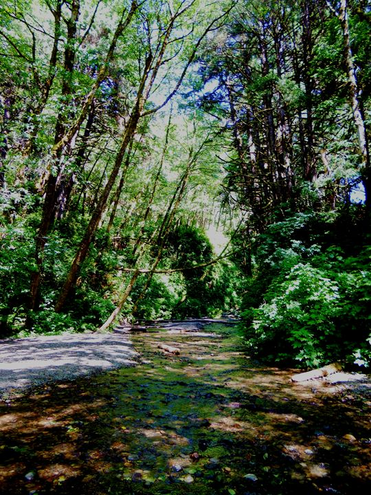 Wooded Creek - Markell Smith Gallery