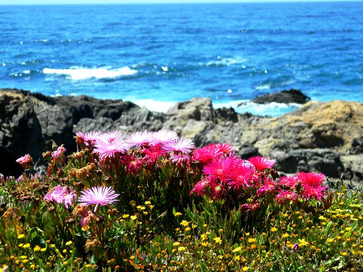 Mendocino Botanical Coast - Markell Smith Gallery