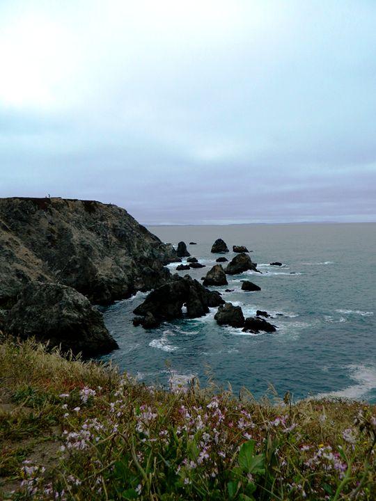 Bodega Headland - Markell Smith Gallery