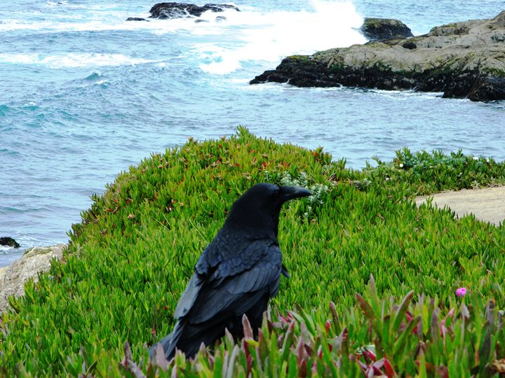 Crow on The Coast - Markell Smith Gallery
