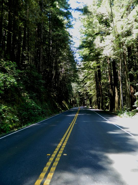The Mendocino Forest - Markell Smith Gallery
