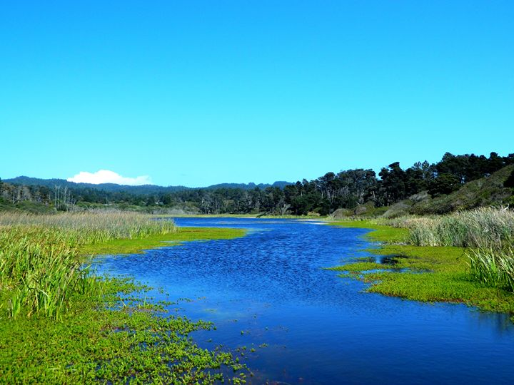 The Pond in Mendocino - Markell Smith Gallery