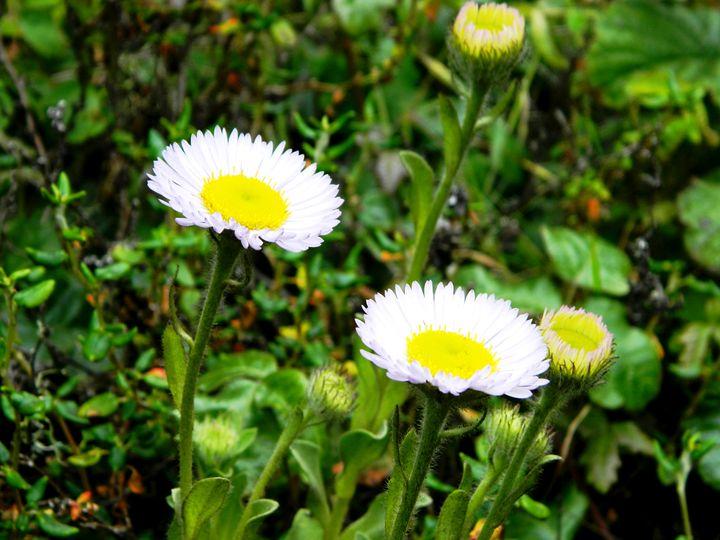 The Garden Flower - Markell Smith Gallery