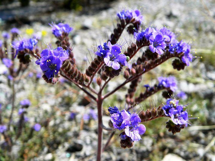 The Purple Wildflower - Markell Smith Gallery
