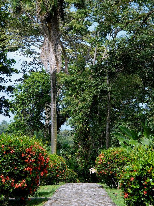 Panama Path - Markell Smith Gallery