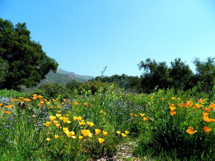 Santa Barbara Botanical Gardens - Markell Smith Gallery