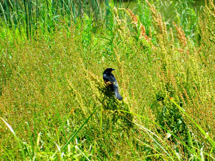 Crow in the Wild - Markell Smith Gallery