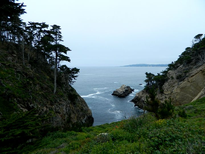 Point Lobos Cove - Markell Smith Gallery