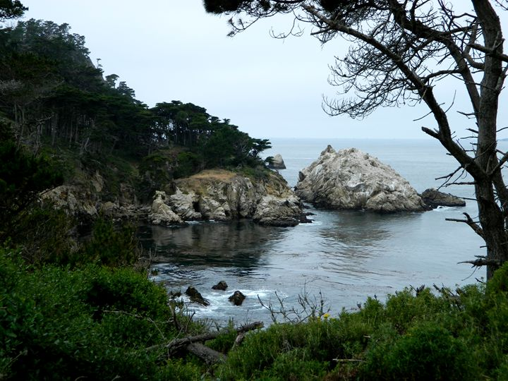 Point Lobos - Markell Smith Gallery