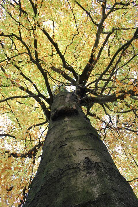 Treetop from Below - Christine aka stine1