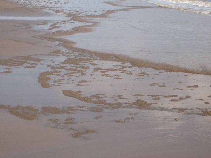 MableThorpe Sand - Tempia