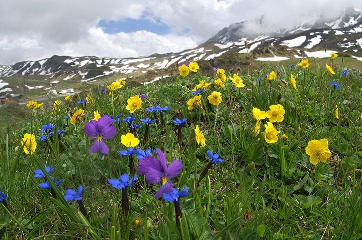 Mountain flowers - eriktanghe