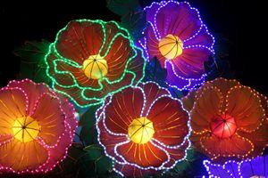 China flowers - eriktanghe
