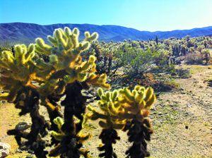 retro pop art meets cacti