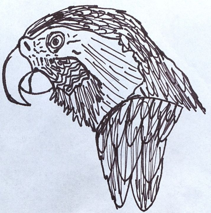 Macaw - Erin Kinnaman