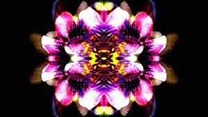 Floral mirroring 1
