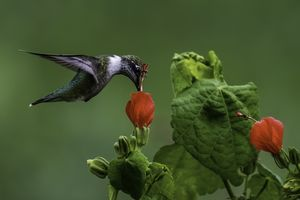 Hummingbird - Tales of Texas Photography