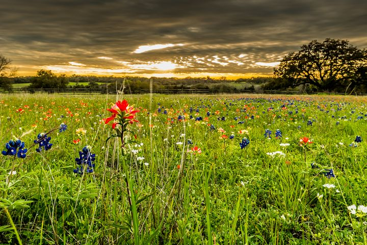 Spring Awakens - Tales of Texas Photography