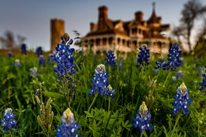 Bluebonnet Home - Tales of Texas Photography