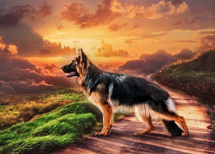 Shepherd - Digital Animals Art