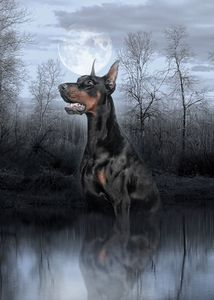 Doberman in the morning fog
